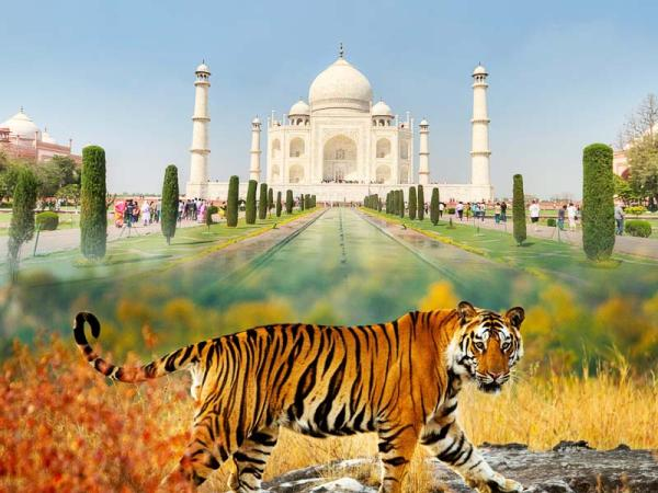 Taj Mahal with Tiger Tour